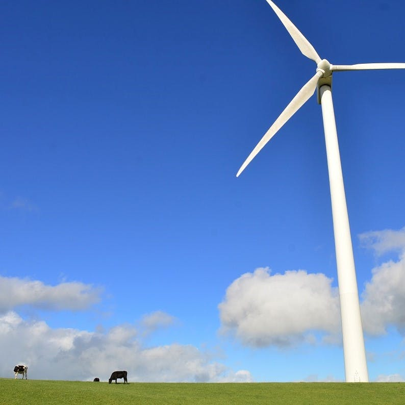 A wind turbine in a field with some cows grazing beside it.