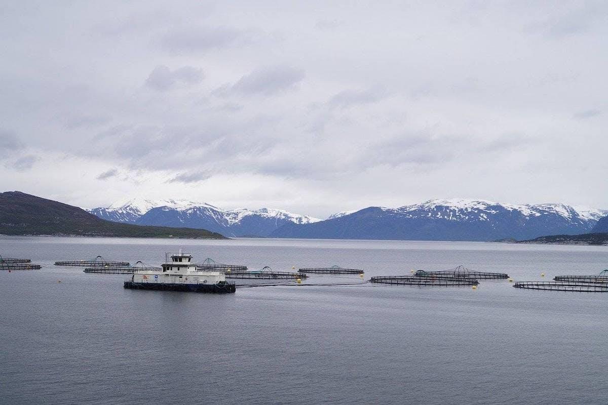 Salmon pens spread across the sea
