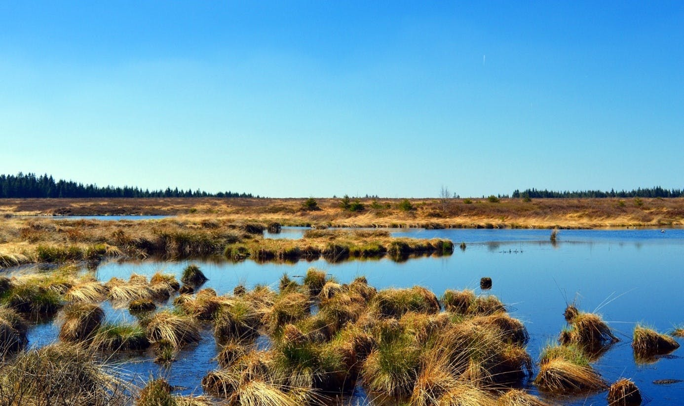 A large peatland area. High amounts of carbon are stored in the peat soil
