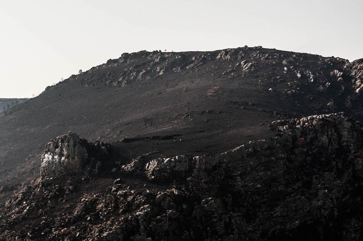 A barren landscape covered in ash after a recent wildlfire