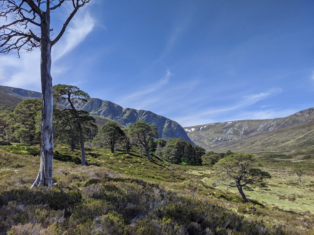 Relict scots pine woodland on a sunny day