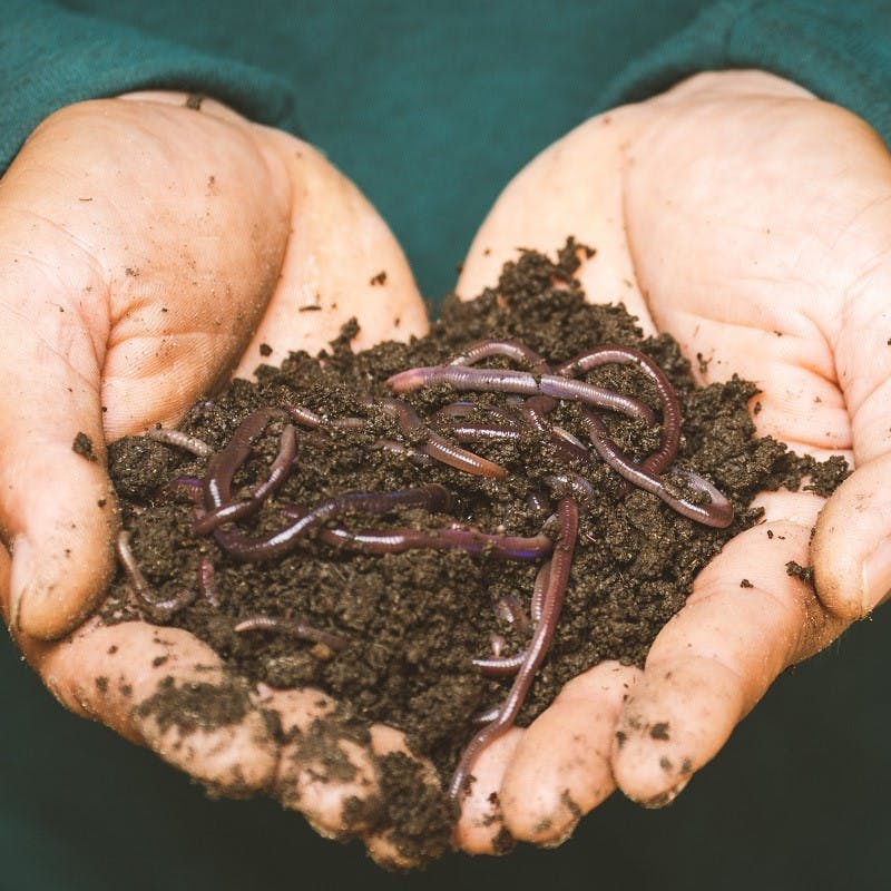 A handful of worms and soil