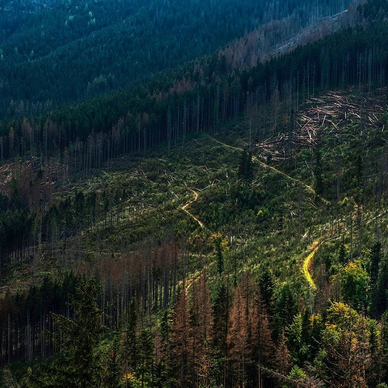 A section of forest with felled trees from deforestation.