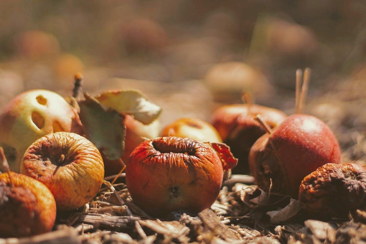 Food waste made up of rotting fruit.