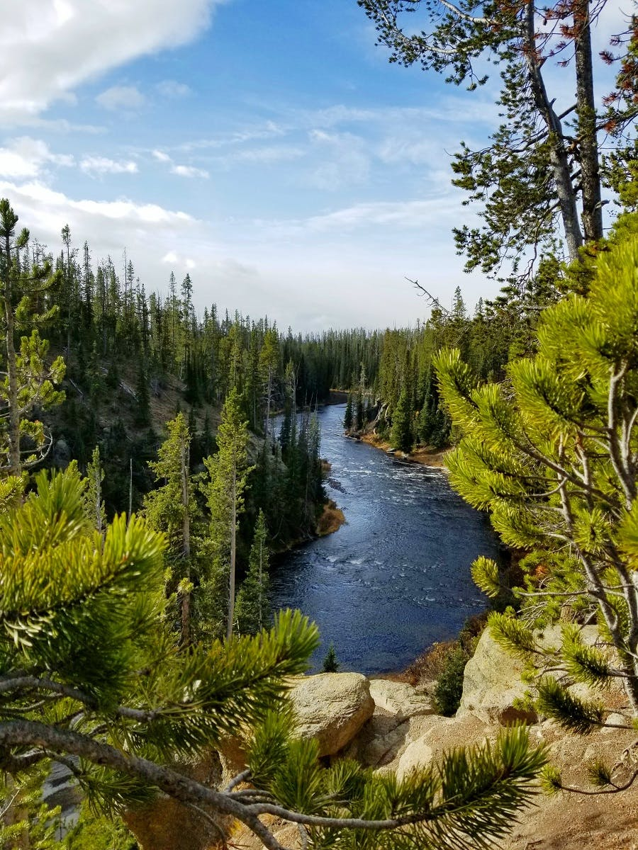 A river running through forests in Yellowstone National Park.