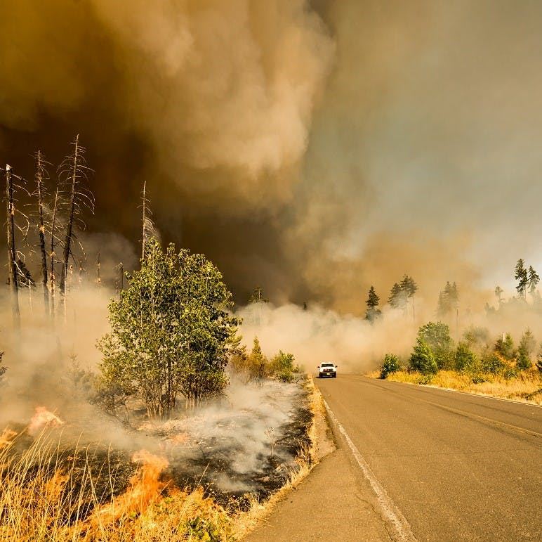A wildfire engulfs a road with a car driving along. Tree planting done right can reduce these natural disasters.