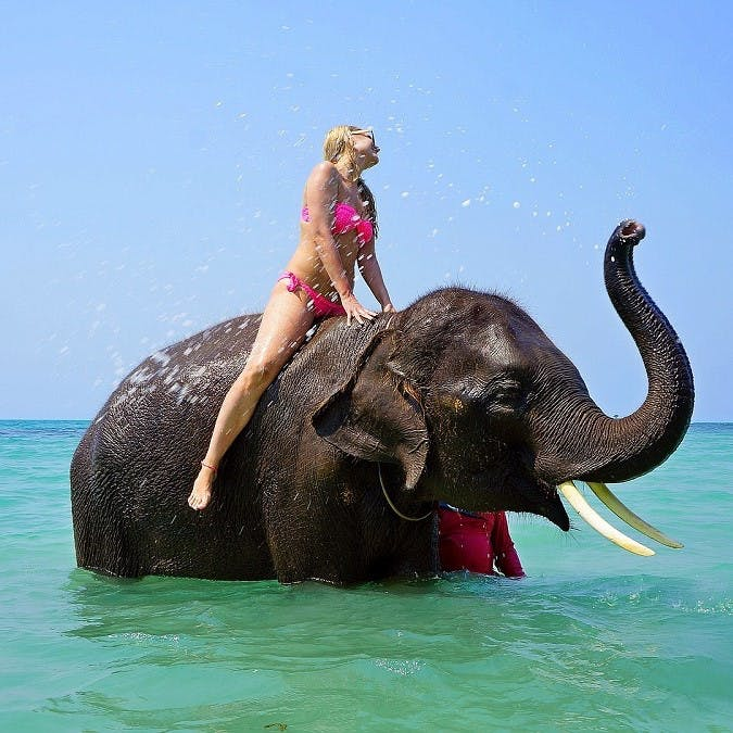A holiday maker ignorantly enjoying an elephant ride. Keep these responsible travel tips in mind before jumping on the back of an elephant, camel  or dolphin.