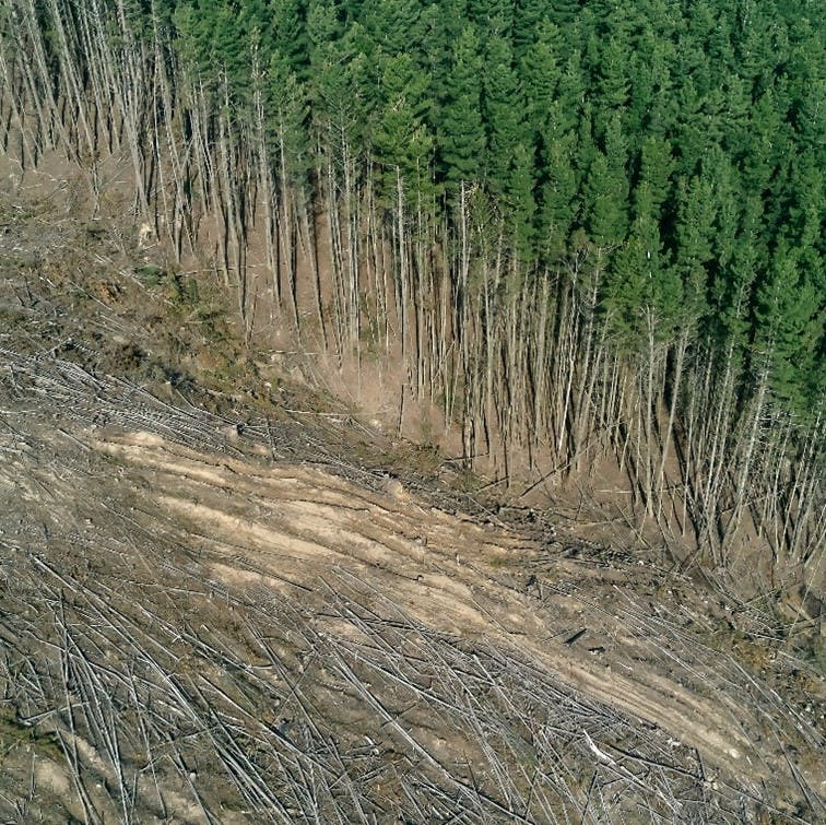 An example of large scale deforestation, which is one of the key human driven drivers of climate change.