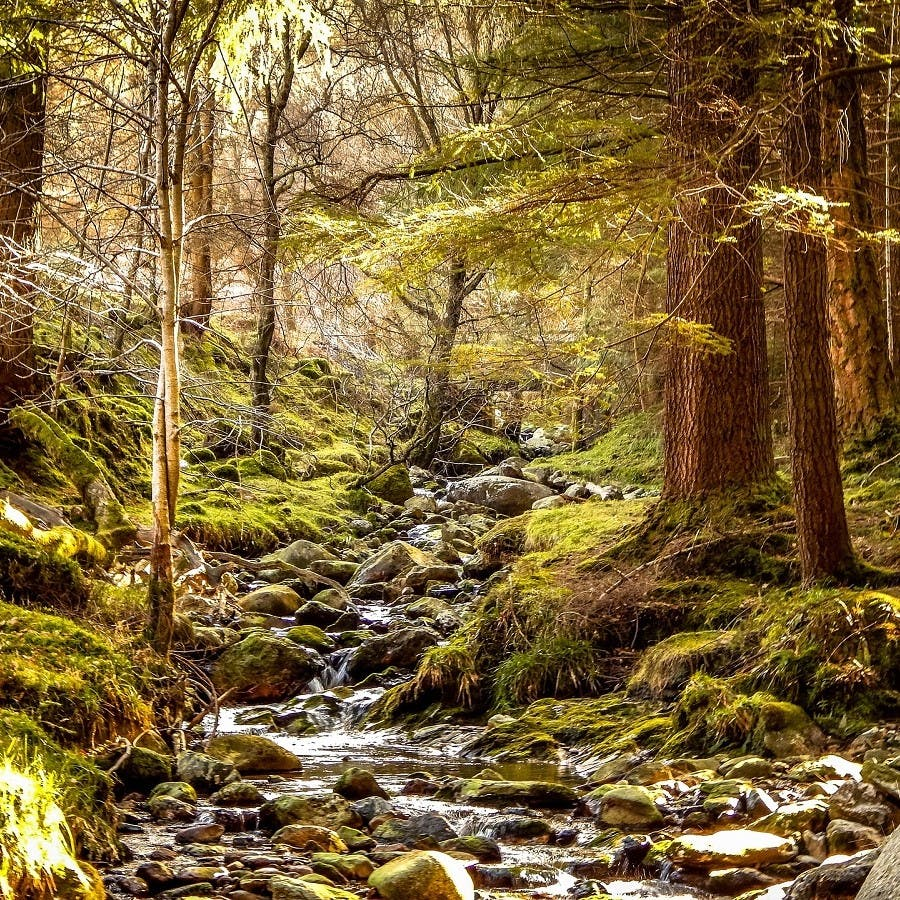 A healthy native forest in Ireland. Sadly, only pockets of such forests exist in Ireland. Rewilding in Ireland seeks to reverse this by encouraging more native wilderness.