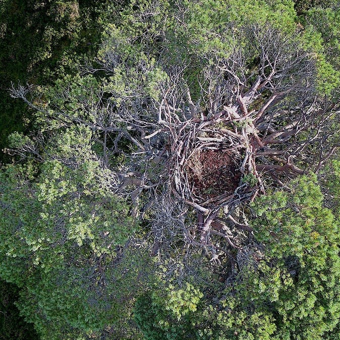 Alladale Wilderness Reserve and Mossy earth eagle platform nest from a birds-eye-view.