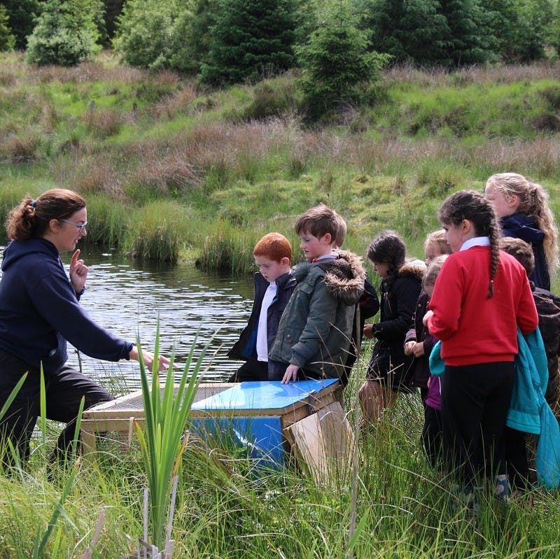 Water voles being released back into the wild by Kelly Hollings, Restoring Ratty Project Officer for Northumberland Wildlife Trust.