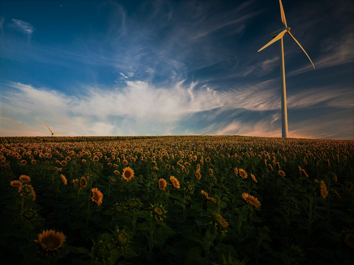 A wind turbine in a field of sunflowers. Replace your fossil fuel home energy with renewables such as wind to help reduce your carbon footprint.