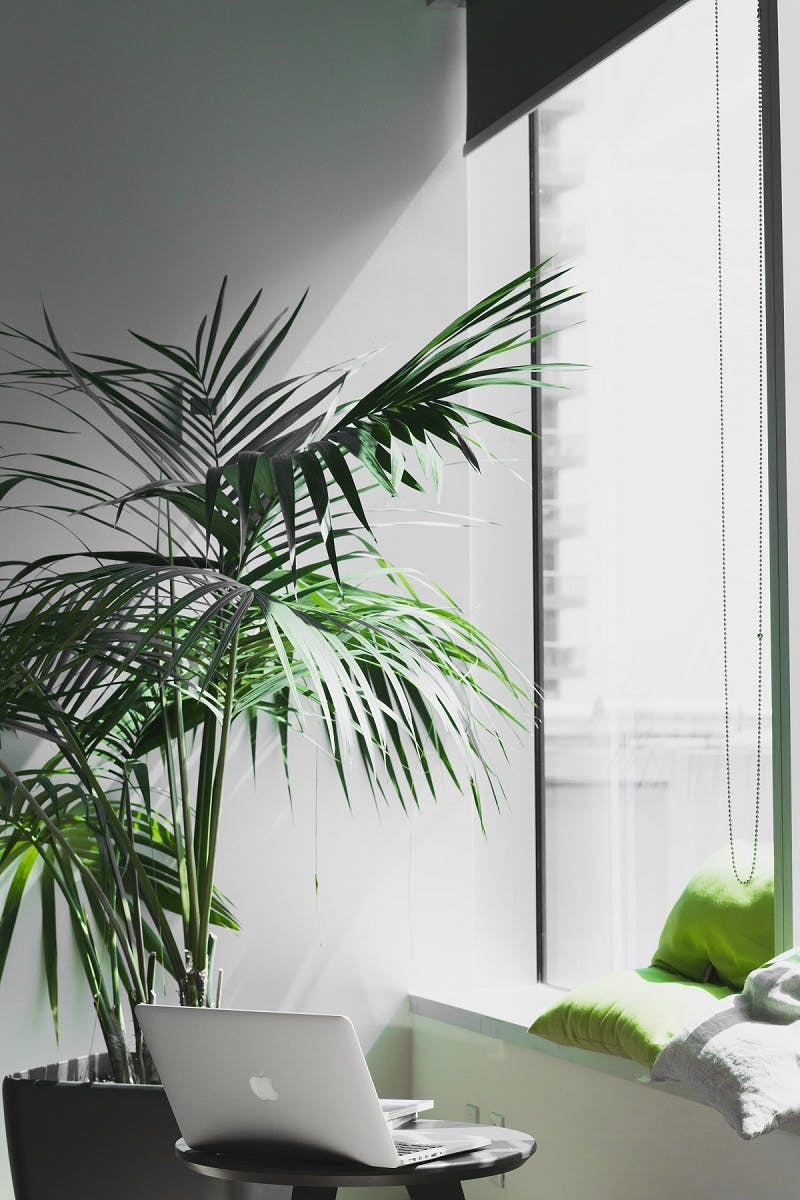 A green office with a plant and laptop next to a window with natural light.