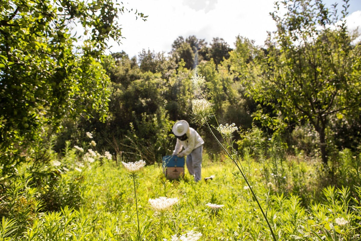A bee keeper tending to his hive on an organic farm. Opting for organic produce is an easy step to saving the bees.