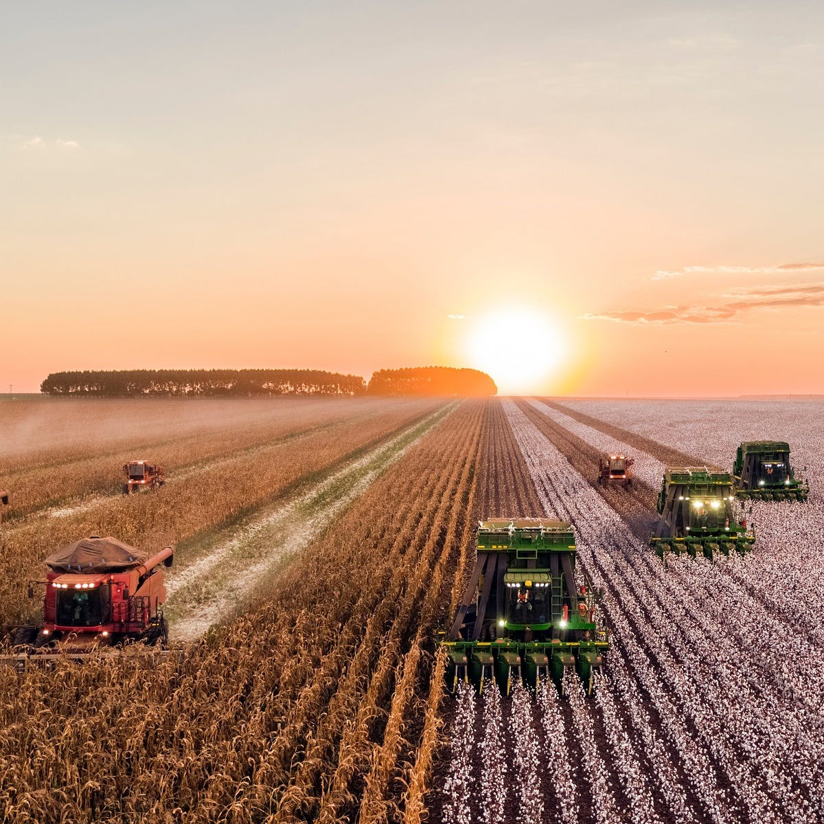 Humanly engineered fields of grain that cover huge areas of the landscape are being harvested. Rewilding seeks to restore some of these lands we have destroyed.