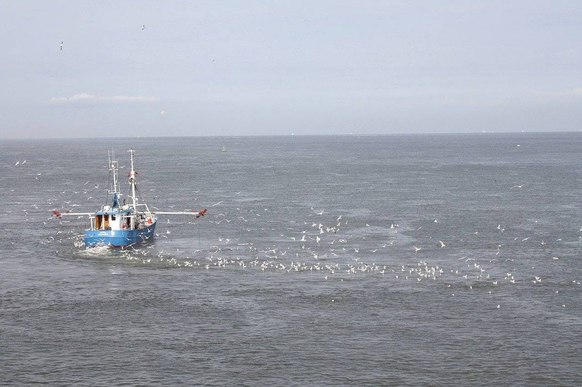 A fishing boat is followed by hundreds of seabirds