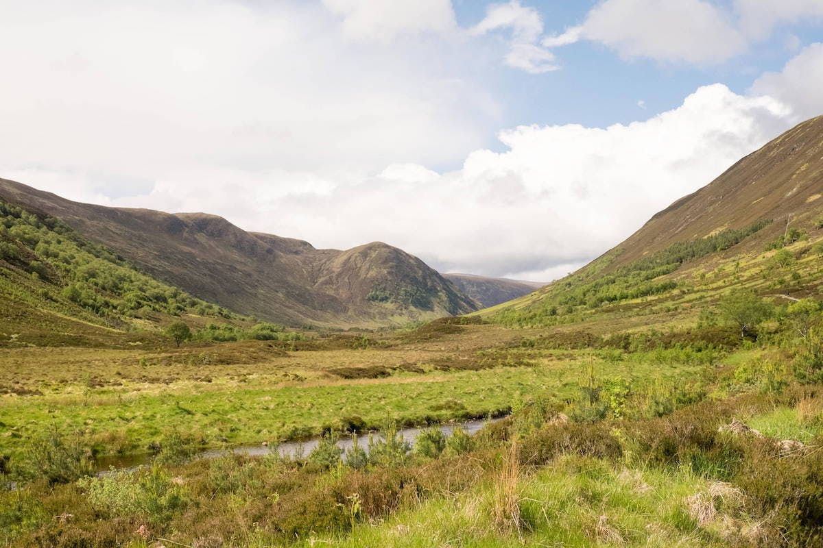 A vibrant green valley covered in both young and tall trees. By rewilding Scotland, more empty hillsides and glens could look like this.