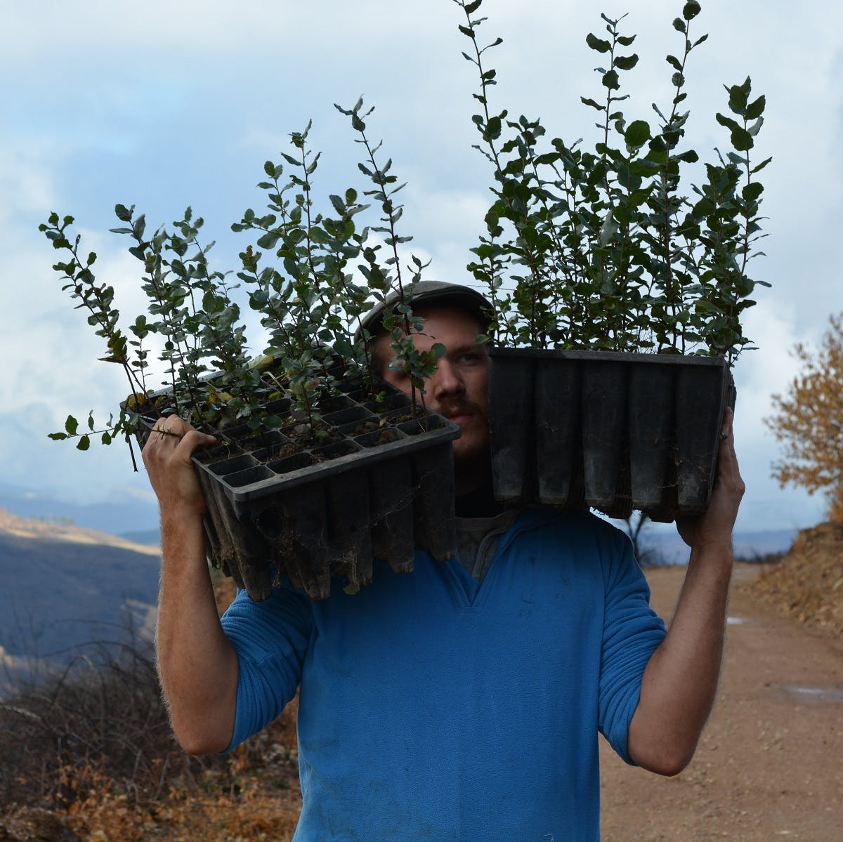 A tree planter carrying native saplings to be planted in Portugal to help fight deforestation on the Iberian peninsula.