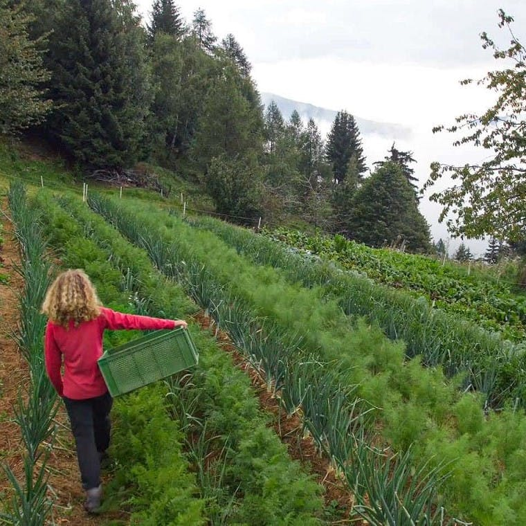 A woman walking down a row of a permaculture vegetable patch with a forest in the background.