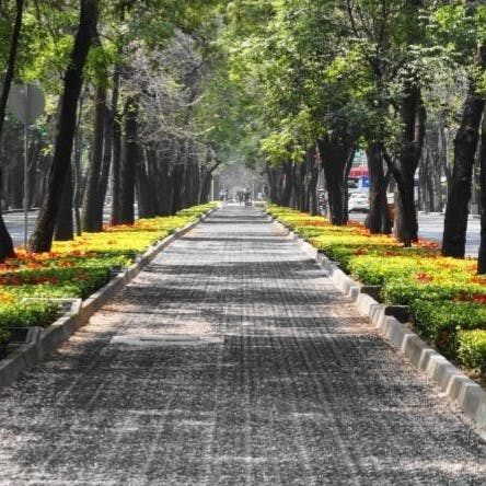 A row of trees and plants line a pathway to act as a wildlife corridor in a city.