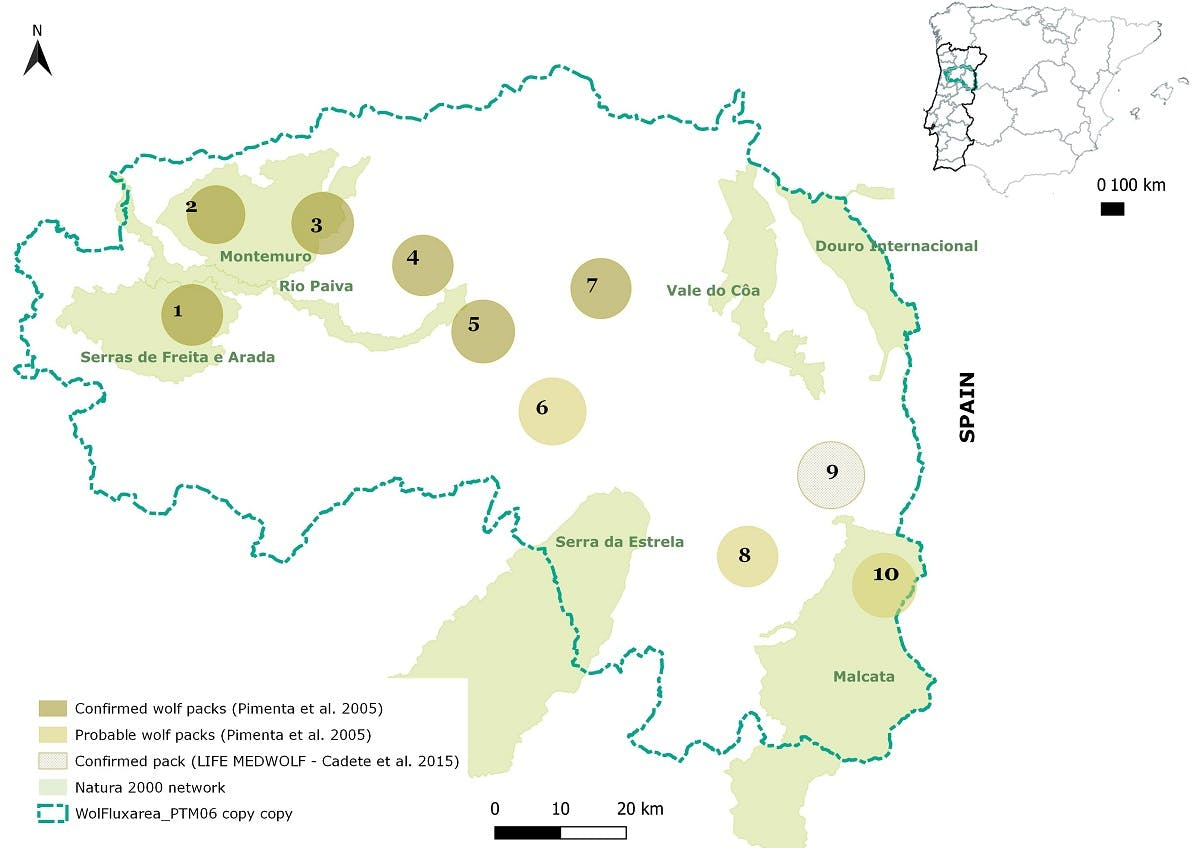 Map of the area and approximate location of wolf packs in the region. Source: Rewilding Portugal.