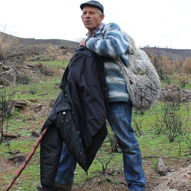 A local sheep farmer, who has had his fair share of run ins and attacks on his flock from the Iberian wolf.