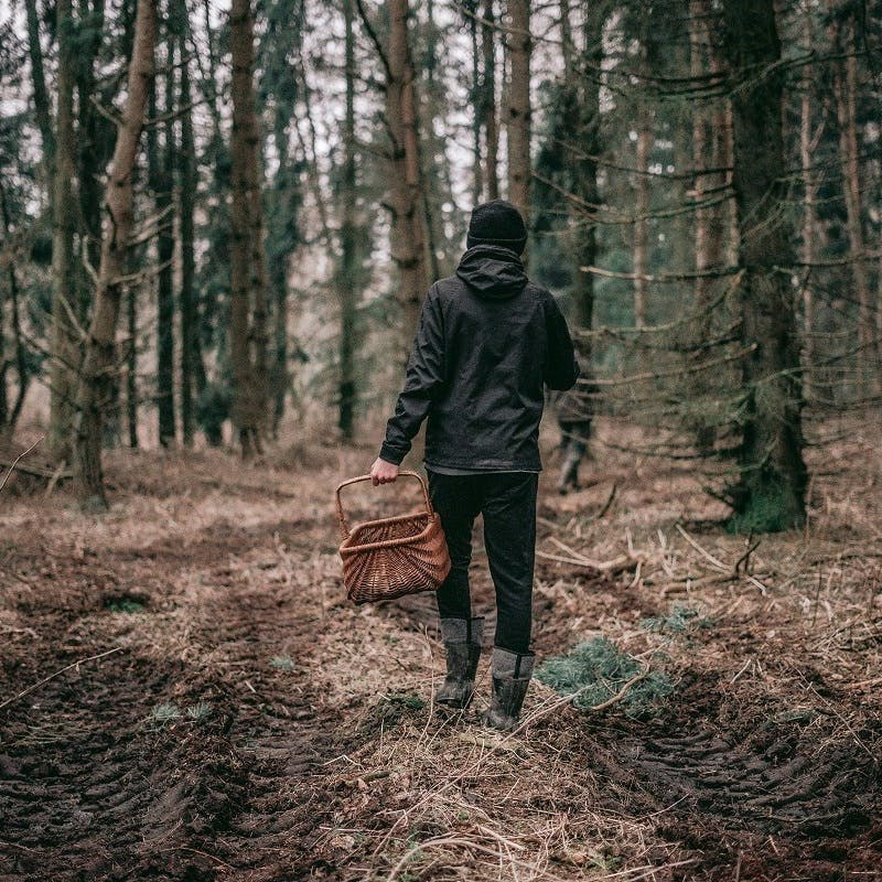 A man with a wicker basket wild food foraging in the woods.