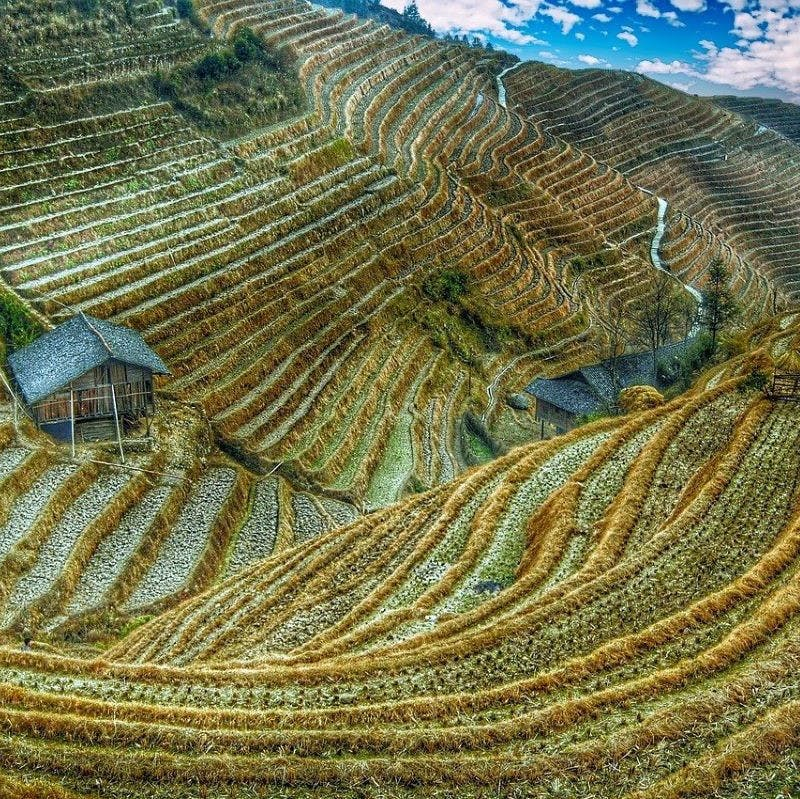 A lonely house perched on the hillside of a valley of rice plantations, one of the causes of habitat fragmentation in Southeast Asia.