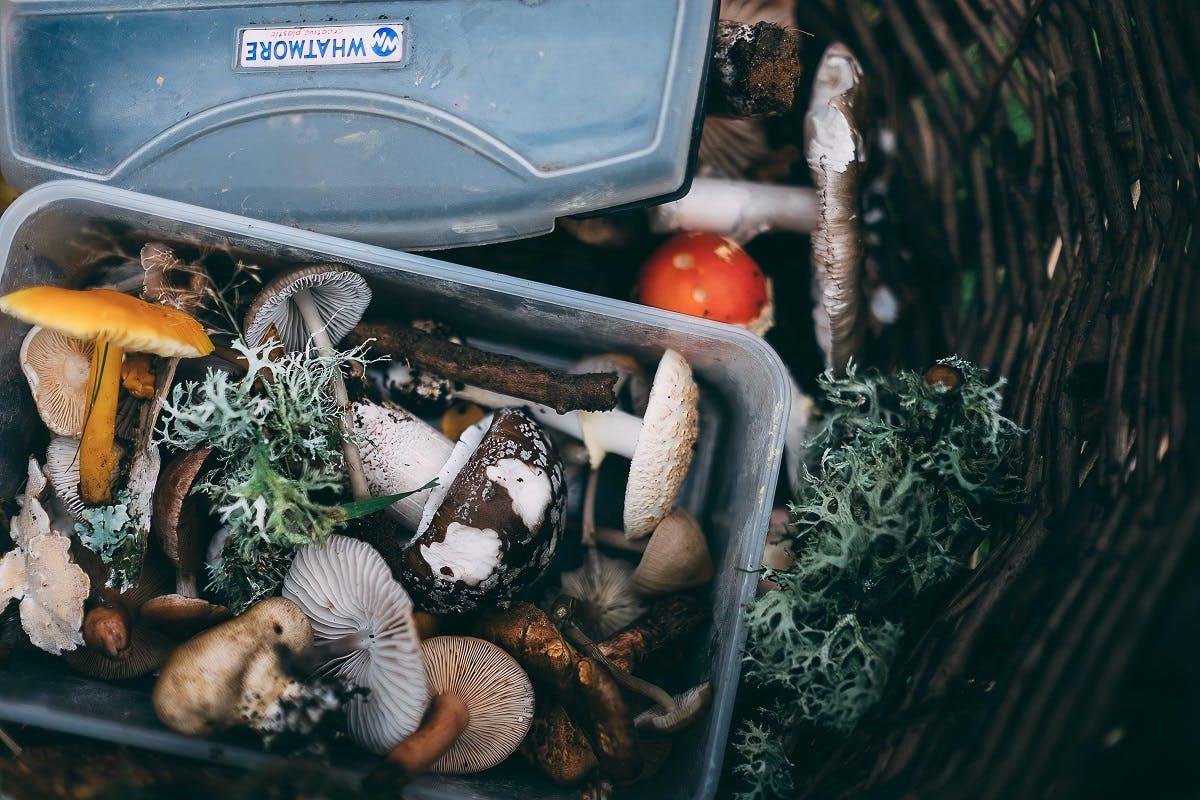 wild foraged mushrooms