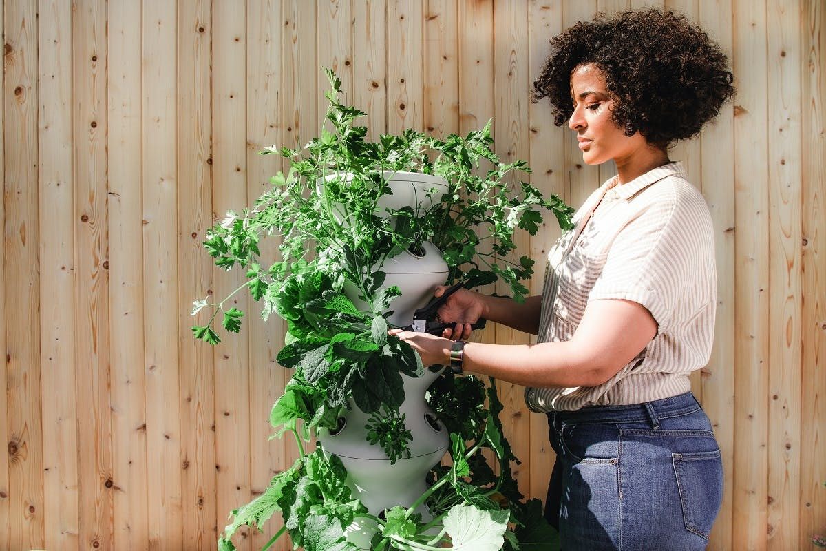 An urban gardener pruning a plant in front of a wooden wall.