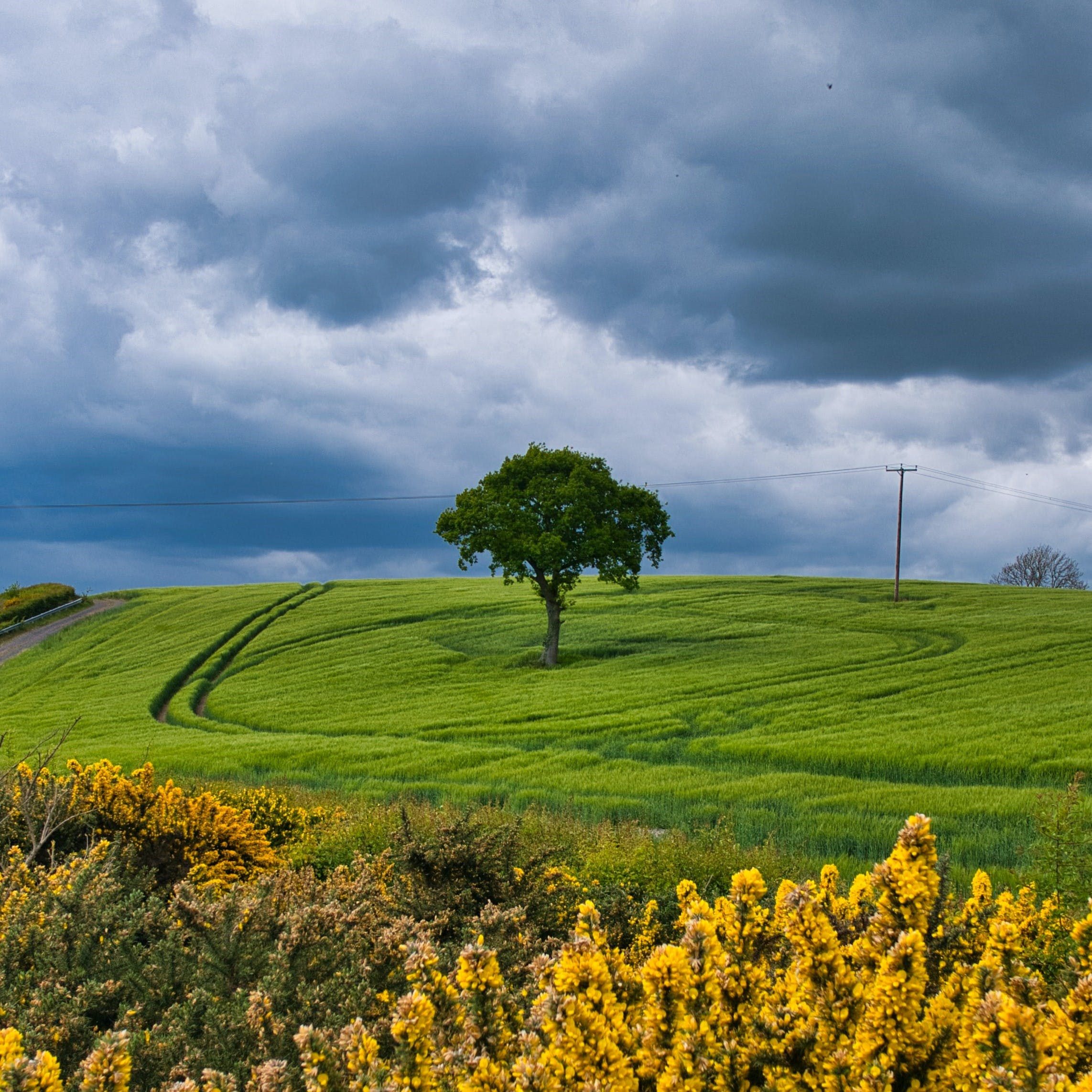 A tree stands alone in the UK countryside.  Due to centuries of Deforestation the UK's tree cover stands at just 13%