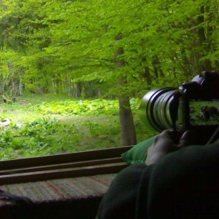 Somebody taking photos from a bear watching hide in Romania