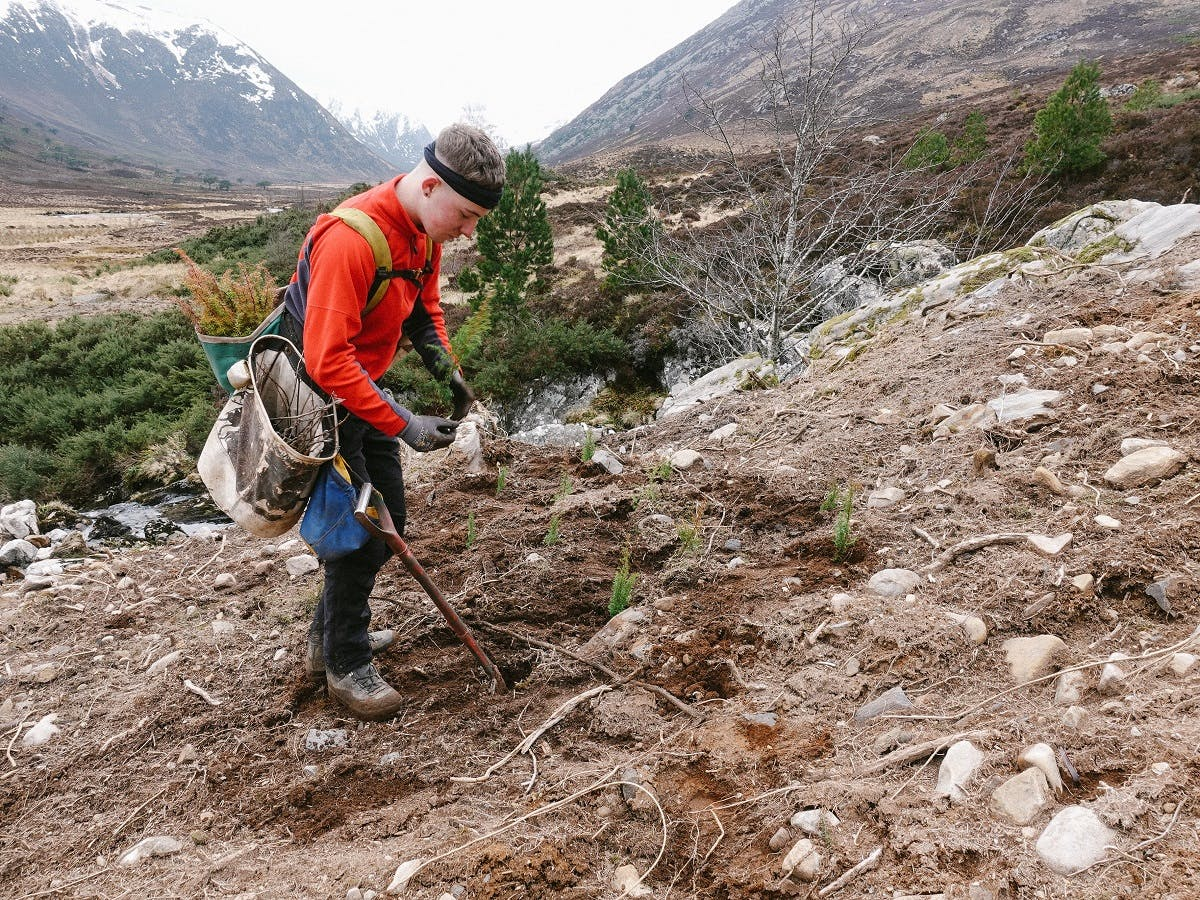 Mossy Earth Tree planting in Scotland. Tree planting is the cheapest and most reliable way to directly sequester carbon from the atmosphere and fight climate change.