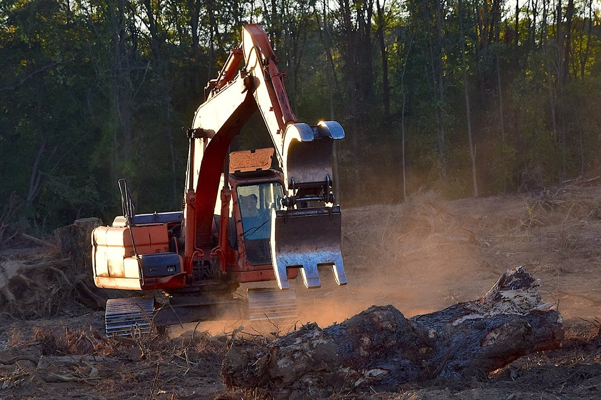 Heavy machinery is used to clear cut logs. Deforestation is the leading driver for our planet's loss of biodiversity.