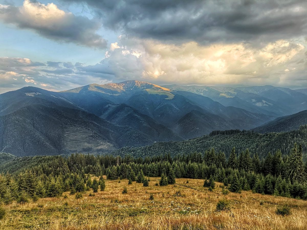 Conifer forests and grasslands cover the mountain sides of Romania's Carpathian Mountains