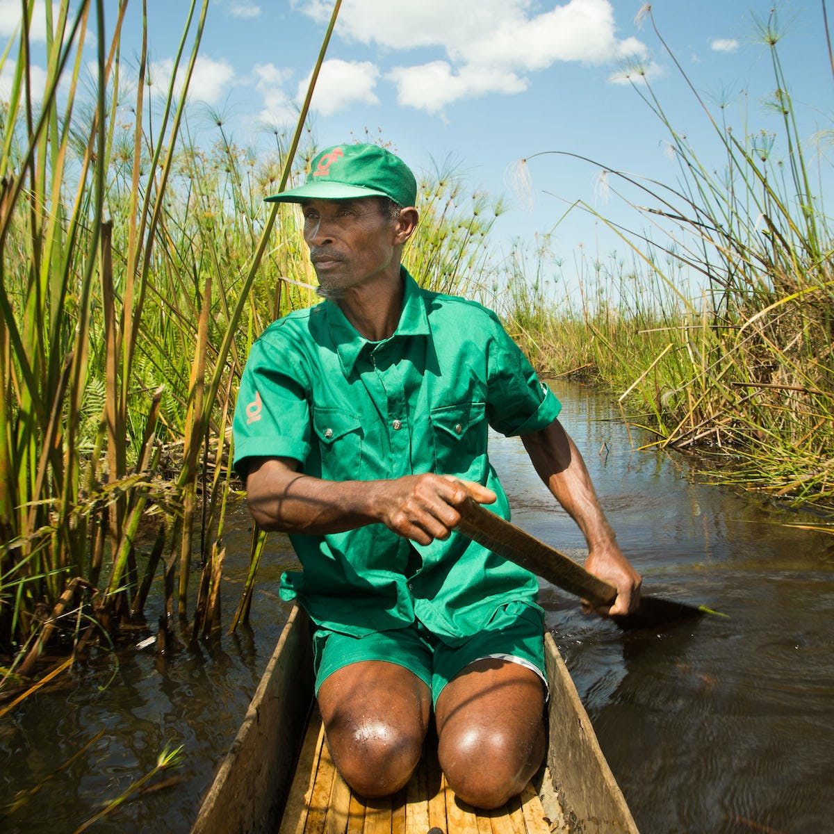 A man kneels in a wooden canoe in a green uniform as he travels through green reed beds