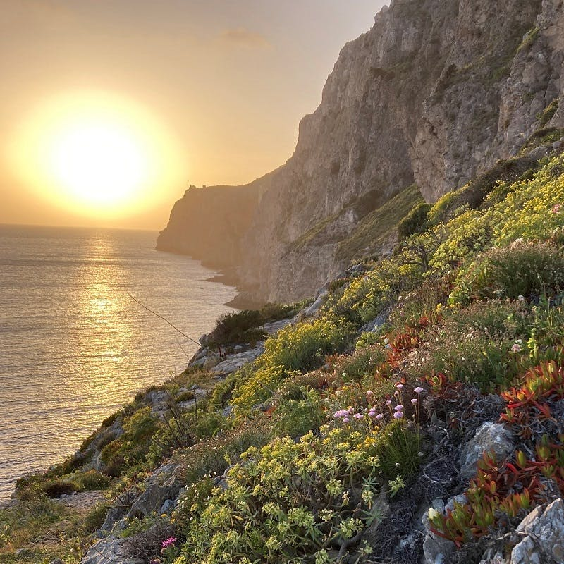 Diverse and colourful vegetation grows on steep cliffs on the seaside as the sun sets in the background.