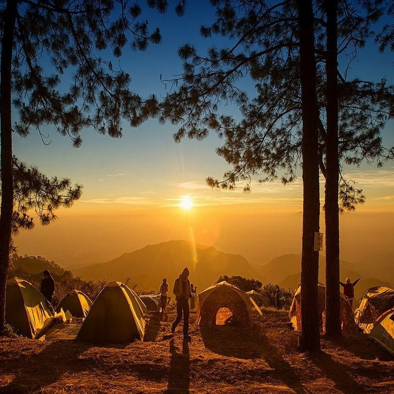 A group of tents and campers pitched in a forest with a view of the horizon. Nature-based tourism is one of the various benefits rewilding brings to the table.