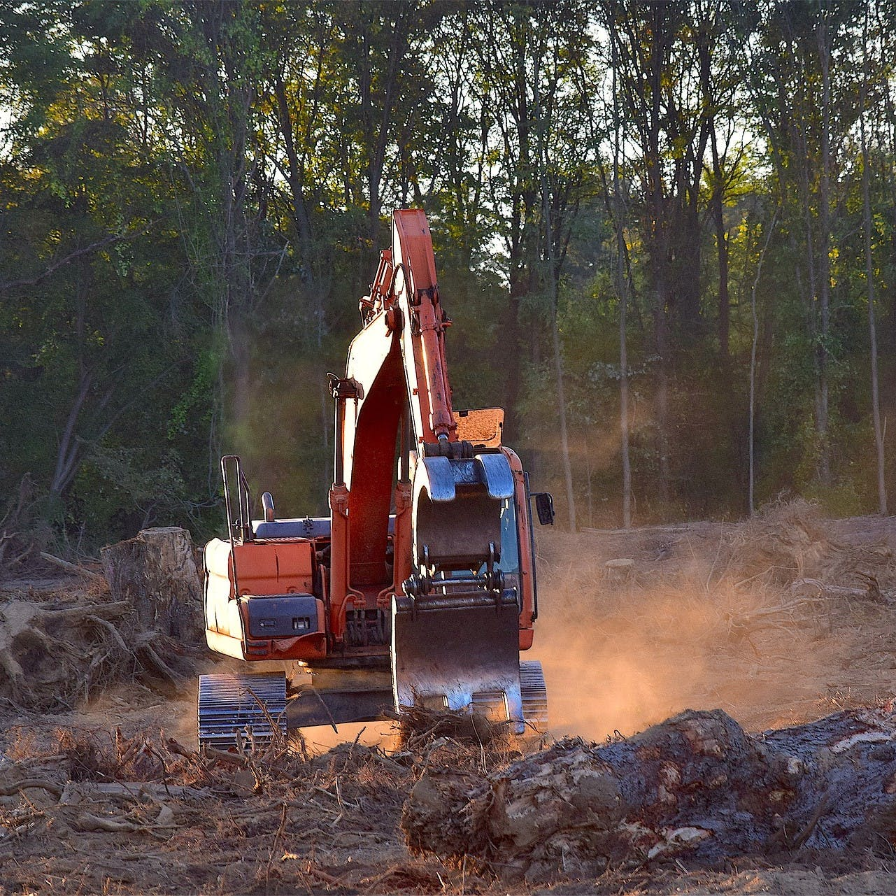 Heavy machinery is used to clear forest. Deforestation is the leading driver for our planet's loss of biodiversity.