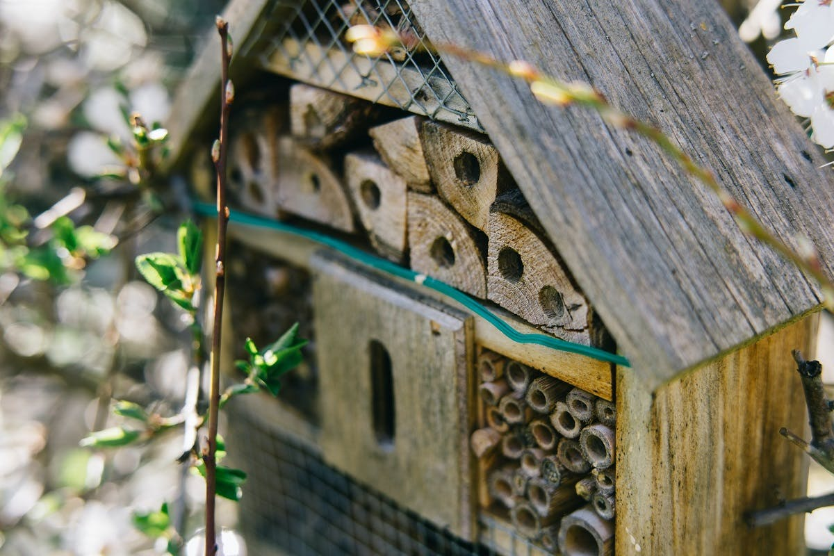 A bug hotel. Constructing a bug hotel in your garden is an easy first step into rewilding.