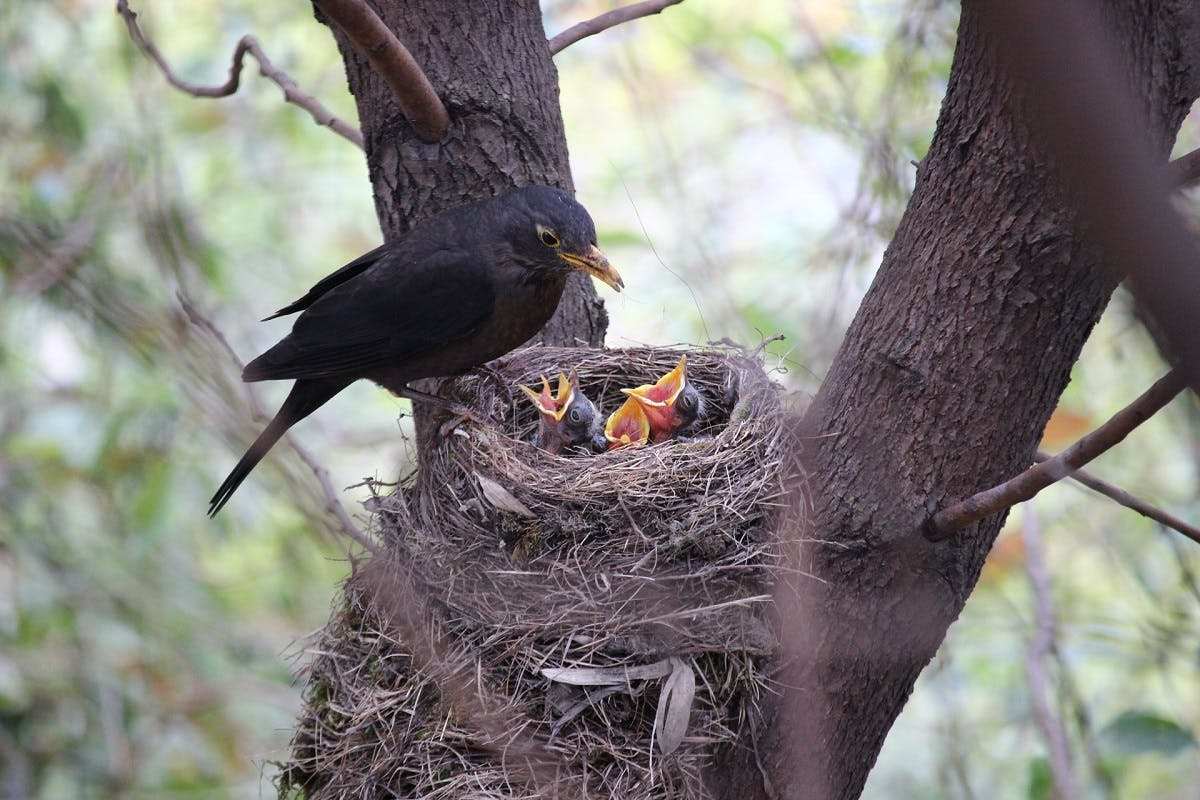 A bird and their children atop a tree.