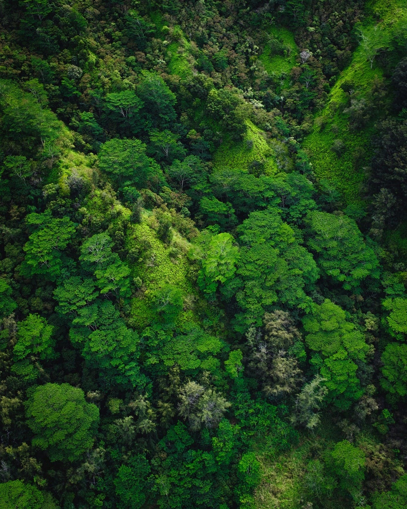 """A dense native and healthy rainforest. Forests are a well-known carbon sink, vast rainforests such as the Amazon are even referred to as the """"lungs of the earth""""  forest"""