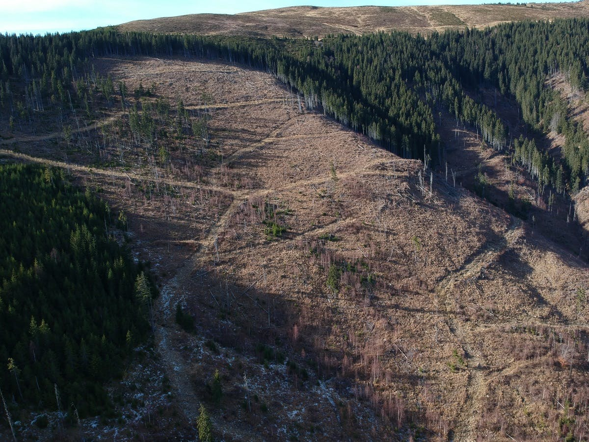 An apocalyptic looking illegal clear cut area in Romania's Southern Carpathian Mountains. Such areas are a blank canvas for rewilding Romania.