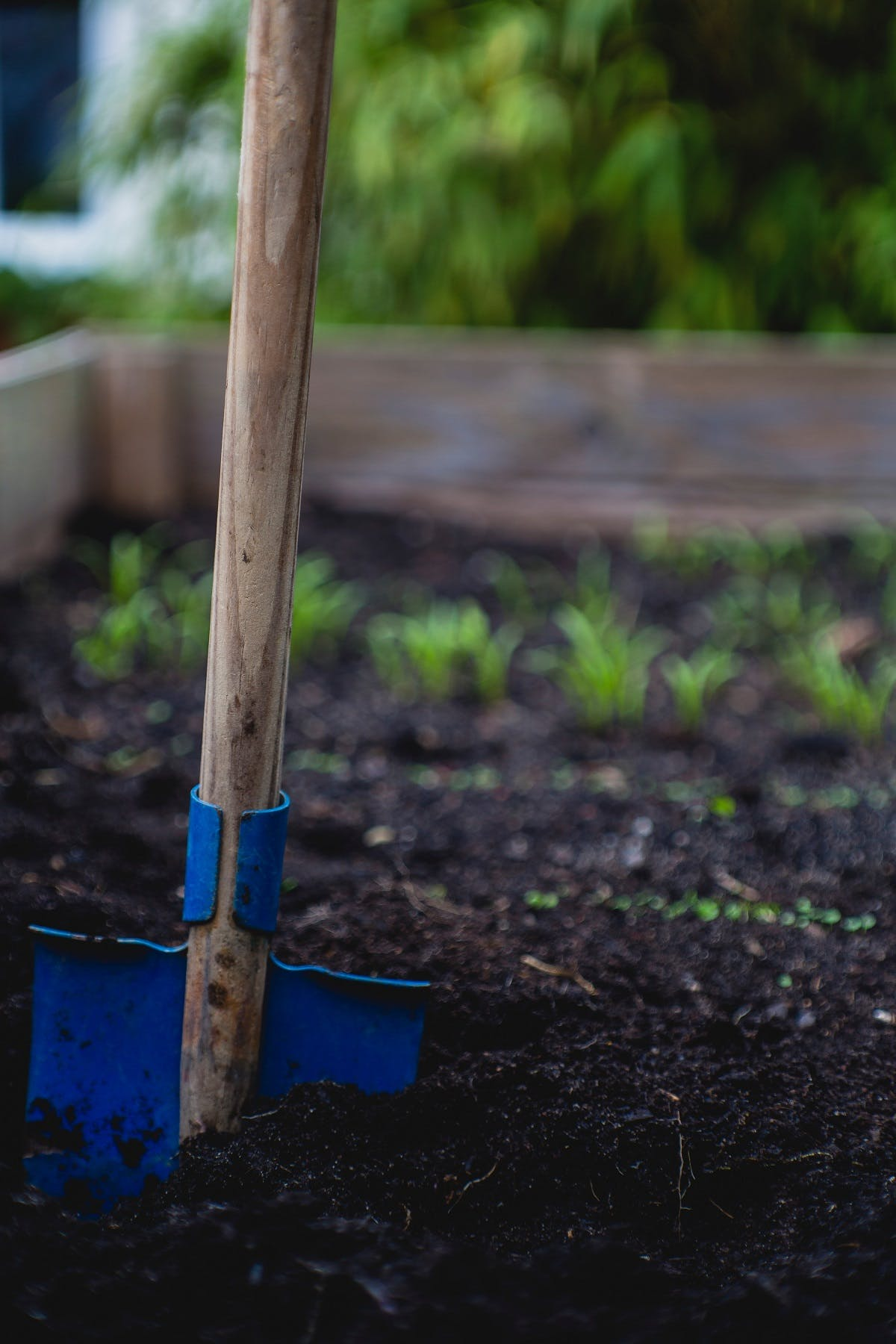 A spade in the soil of a raised vegetable bed. A raised bed is an easy first step to growing your own vegetables