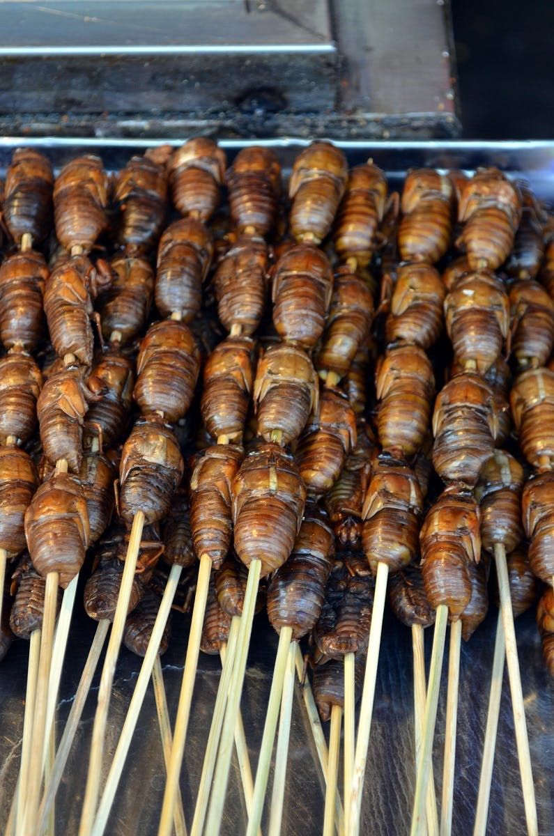 Edible insect kebabs