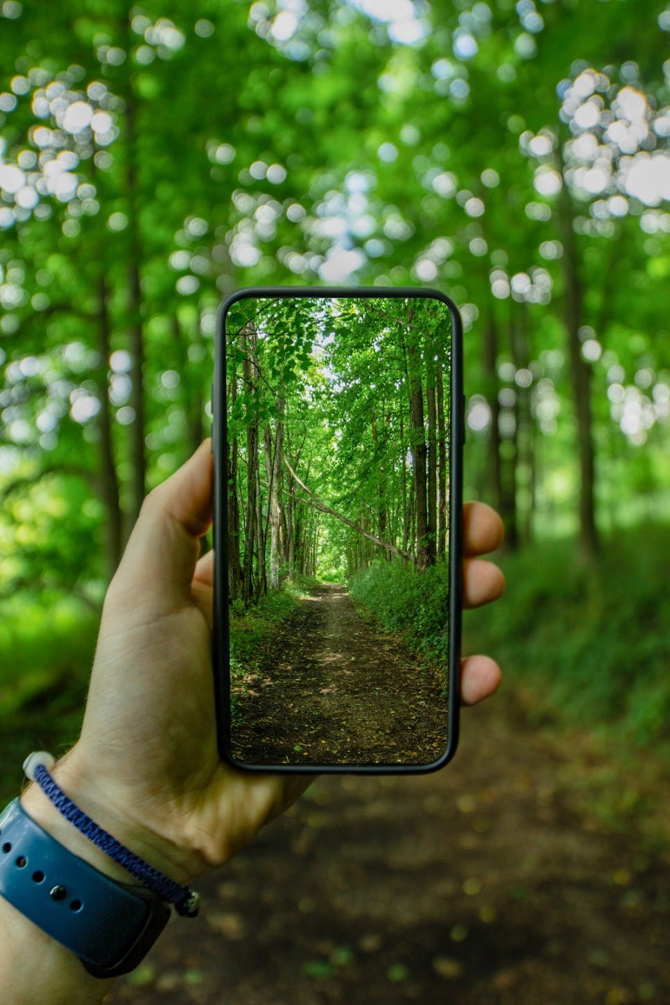A person taking a photo of a forest with their sustainable and ethical smartphone by Fairphone.