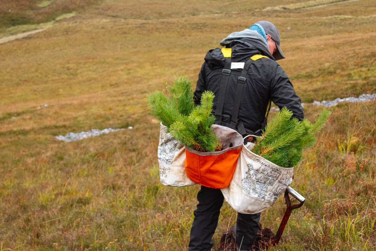 A treeplanter at work in the Scottish Highlands planting native species.