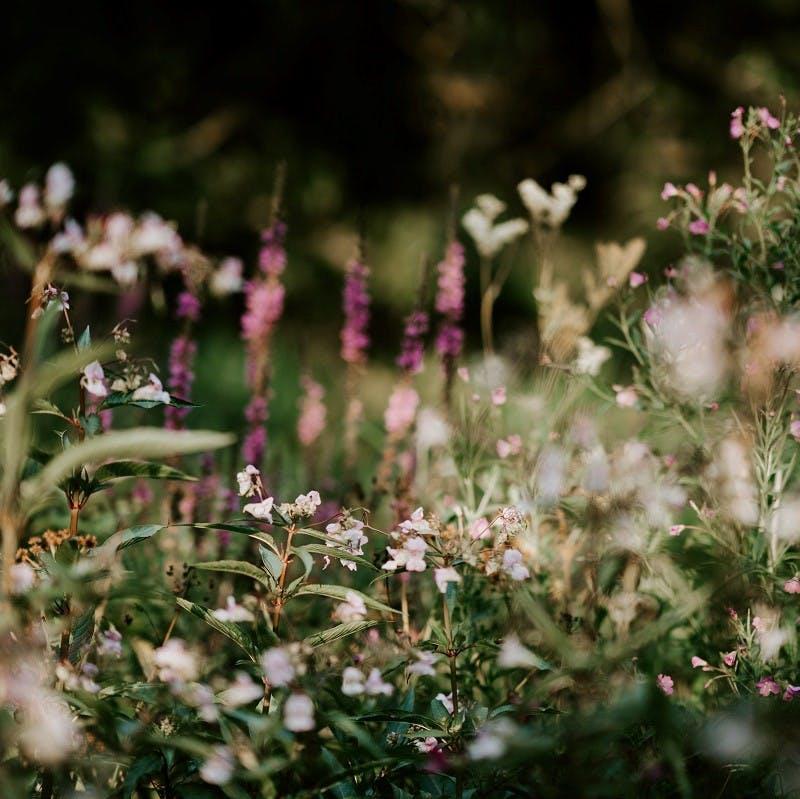 Wildflowers in a field.