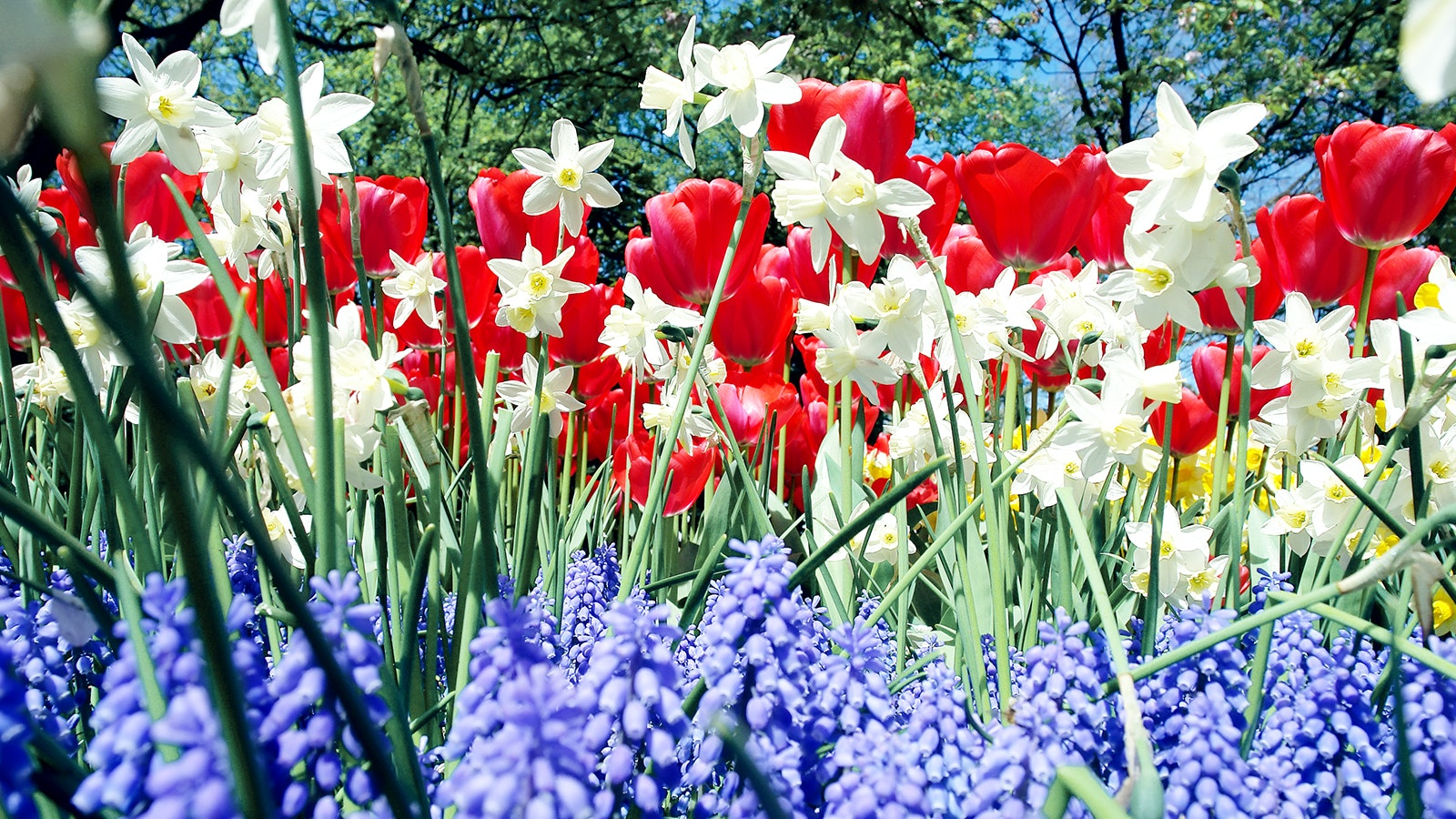 Red White And Blue Flowers For Curb Appeal In Every Climate