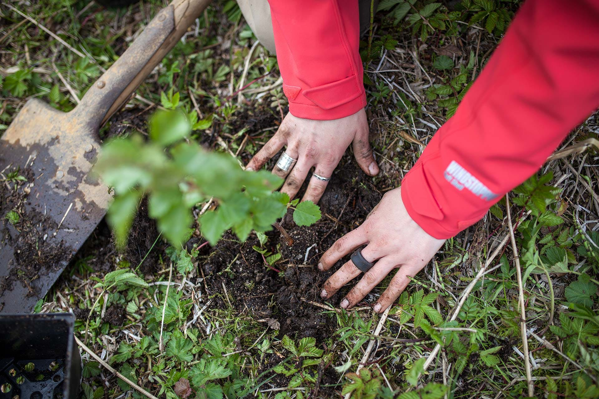Hands of a person planting a tree